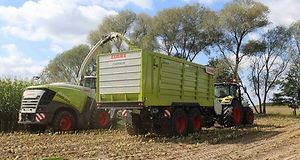 zbiór kukurydzy, rekordowy plon, kiszonka, bydła
